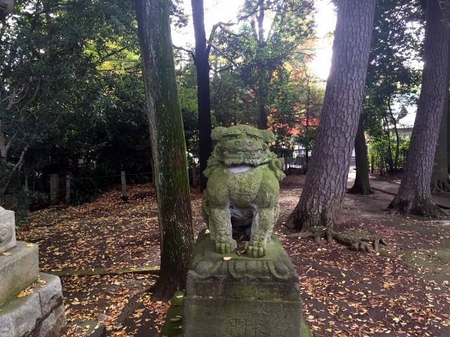 和泉熊野神狛犬さん2